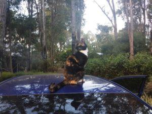 Cat Perth 6
