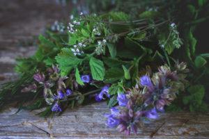 herbs for kids immunity