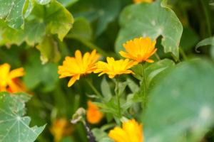 homeopathy for kids immunity