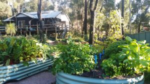 perth homeopath garden